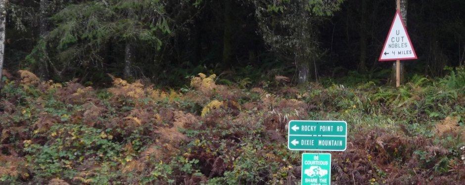 Christmas-Tree-Farm-North-Plains-Oregon