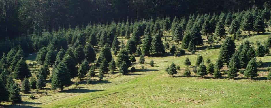 Christmas-Tree-Farm-Portland-OR