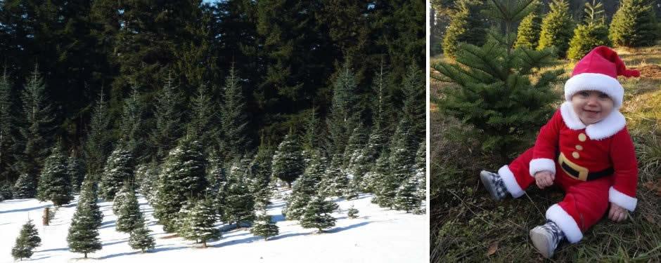 Portland-Oregon-Christmas-Tree-Farm