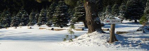 U-Cut Christmas Tree Farm Oregon